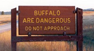 5dangerous-buffalo1