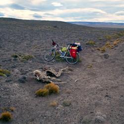Direzione lago Cardiel – Carcassa di guanaco